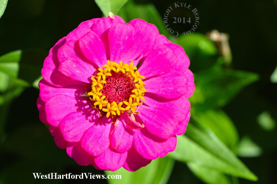 Flowers in a Flower